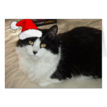 Christmas Black and White Cat Greeting Card