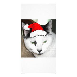 Christmas Black and White Kitten Card