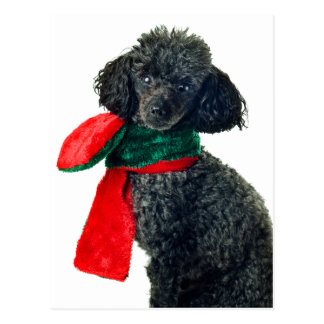 Christmas Black Toy Poodle Dog Reindeer Red Scarf Postcard
