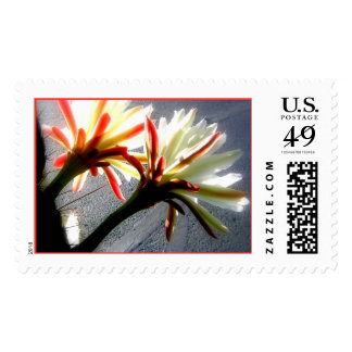 Christmas Blooms Postage Stamp