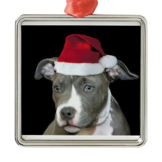 Christmas blue pitbull puppy ornament