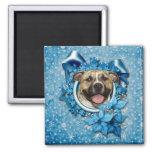 Christmas - Blue Snowflake - Pitbull - Tigger Magnet