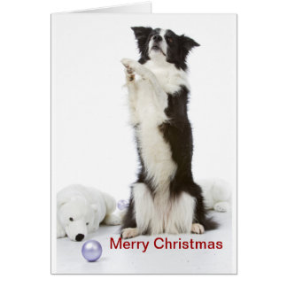 christmas border collie sitting up card
