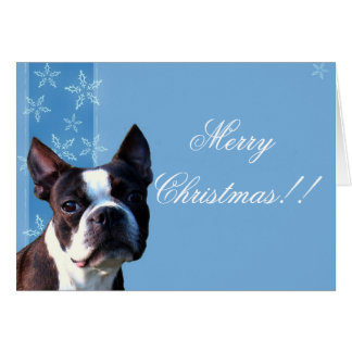 Christmas Boston terrier greeting card