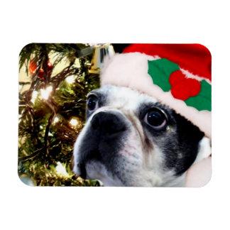 Christmas Boston terrier Magnet