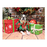 Christmas - Boston Terrier - Natty Postcard
