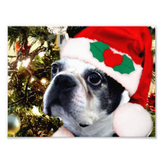 Christmas Boston terrier Photo Print