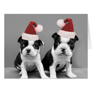 Christmas Boston Terrier puppies Greeting Card