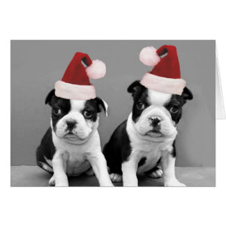 Christmas Boston Terriers Card