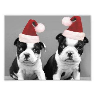Christmas Boston terriers Photo Print