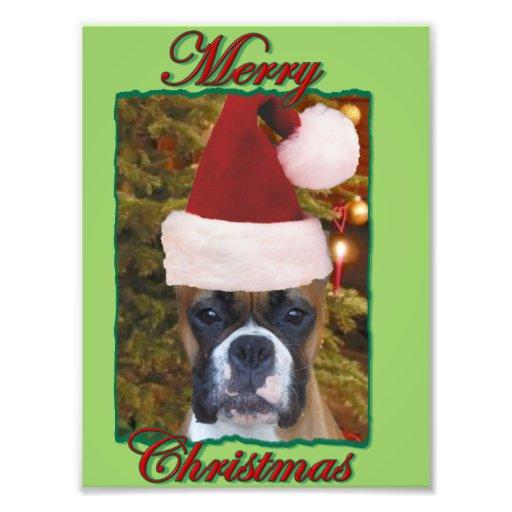 Christmas boxer dog photo