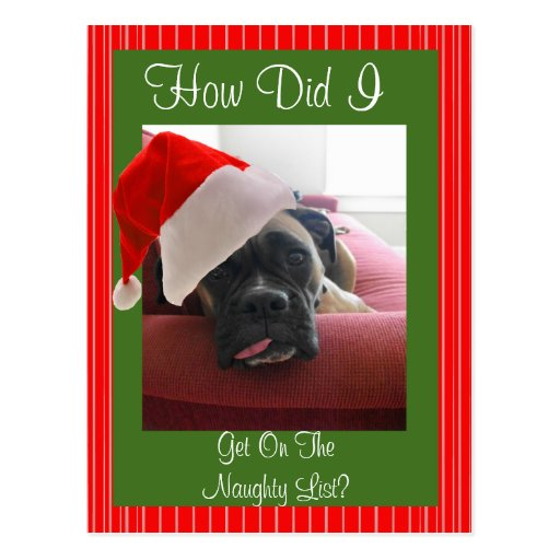 Christmas Boxer Postcard