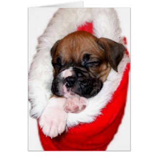 Christmas boxer puppy greeting card