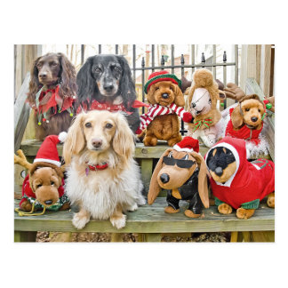 Christmas brings the whole family together postcard