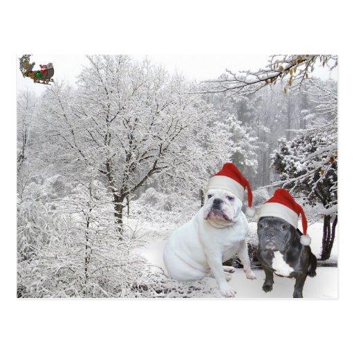Christmas bulldogs 1 postcards