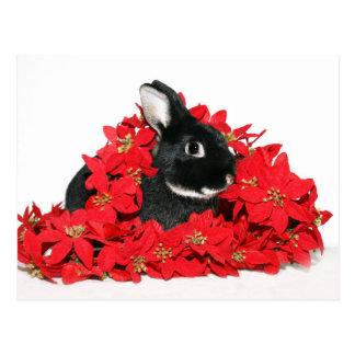 Christmas bunny postcard