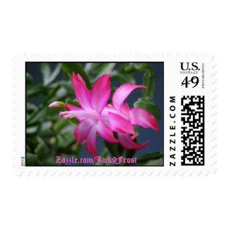 Christmas Cactus #01, Zazzle.com/Jack9Frost Stamp