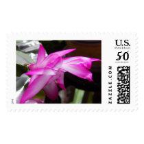Christmas cactus flower stamp