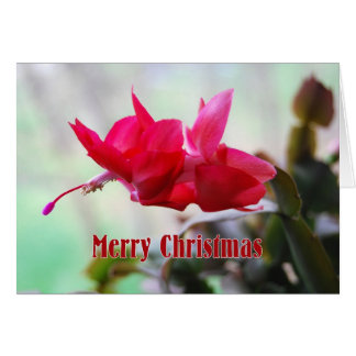 Christmas Cactus Merry Christmas Card