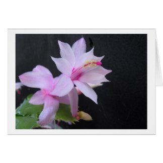Christmas Cactus, photograph Greeting Card