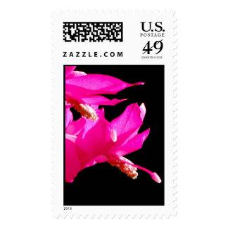 Christmas Cactus Postage Stamp