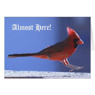 Christmas Card: Cardinal Landing