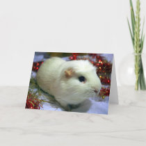 Christmas card guinea pig