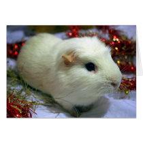 Christmas card guinea pig