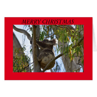 CHRISTMAS CARD KOALA IN A TREE RURAL AUSTRALIA