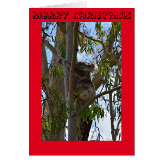 CHRISTMAS CARD KOALA IN ATREE AUSTRALIA