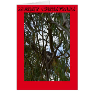 CHRISTMAS CARD KOALA IN TREE QUEENSLAND AUSTRALIA