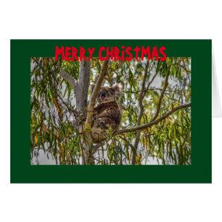 CHRISTMAS CARD KOALA QUEENSLAND AUSTRALIA