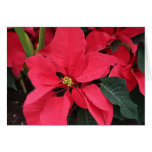 Christmas Card with Bright Red Poinsettia