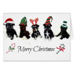Christmas Card with Schnauzer Puppies
