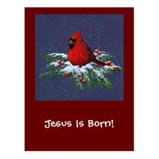 CHRISTMAS CARDINAL: BIRD: ART: SNOW POSTCARD