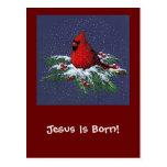 CHRISTMAS CARDINAL: BIRD: ART: SNOW POSTCARDS
