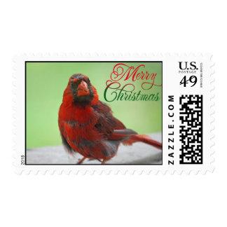 Christmas Cardinal Bird Picture Postage
