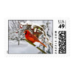 Christmas,  Cardinal Bird, Snow Postage