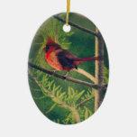 Christmas Cardinal in Cypress Christmas Tree Ornament
