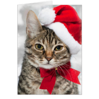 Christmas cat at red santa's hat card