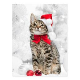 Christmas Cat At Red Santa's Hat Near Christmas Postcard