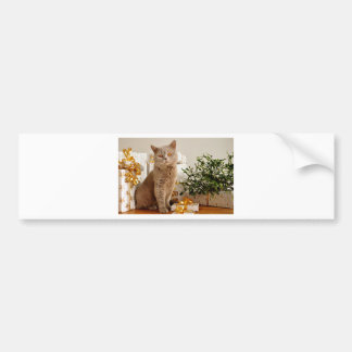 Christmas Cat Bumper Sticker
