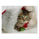 Christmas cat -kitten cat - cute cats poster