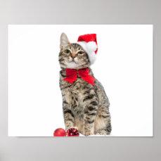 Christmas cat - santa claus cat - cute kitten poster