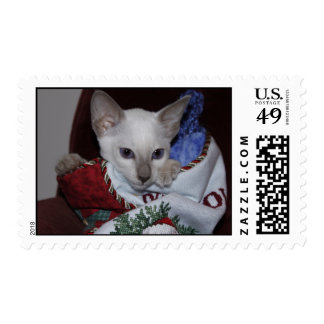 Christmas Cat - Siamese Lilac Point in Stocking Stamp