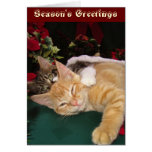 Christmas Cats, Cute Kittens Hugging, Kitty Smile Cards