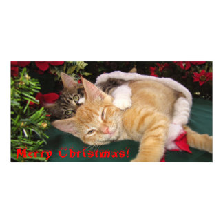 Christmas Cats Cute Kittens Hugging Kitty Smile Photo Card Template
