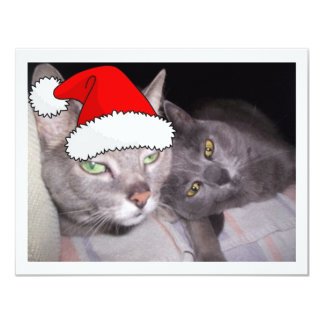 Christmas Cats Invitation