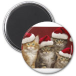 Christmas cats magnet