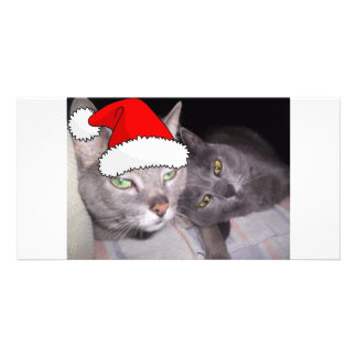 Christmas Cats Photo Card